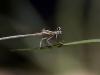 small-dragonfly2-sharpen
