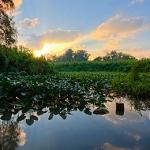 טיול במעיינות הירקון: גן עדן ירוק בלב העיר